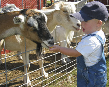 Kids St. Augustine: Animal Encounters - Fun 4 Auggie Kids