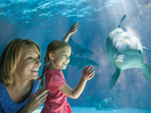 Sea World Florida Teacher Pass